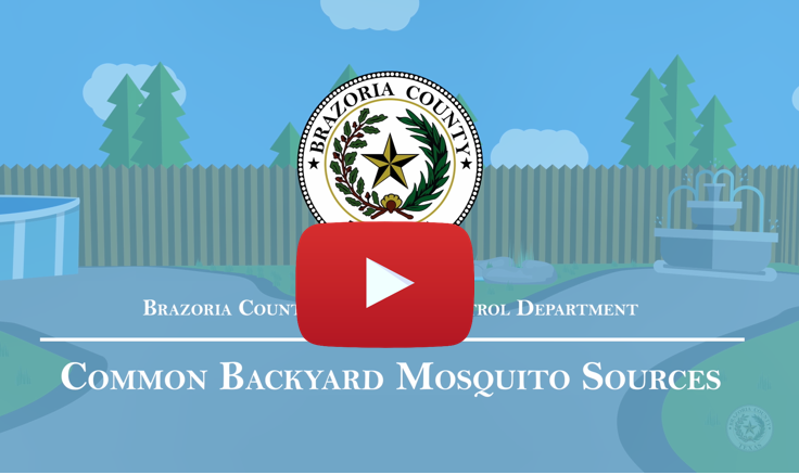 mosquito source video play button